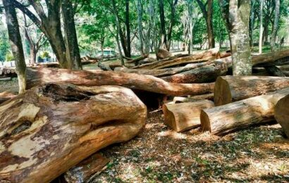 More rosewood timber seized in Wayanad district in Kerala