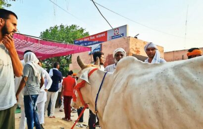 Protesting Haryana farmers move into police station, cow in tow