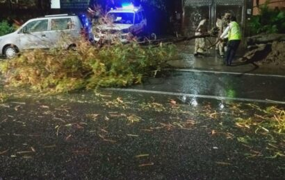 Strong winds in Delhi cause trees to fall, walls to collapse
