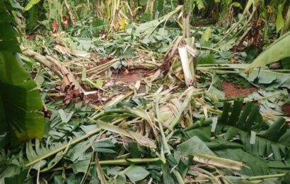 Elephant herd goes on a rampage, destroys crops in Chittoor