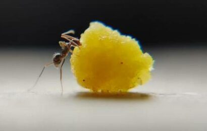 Malayalam short 'The Ants' gives a peek into the life of ants