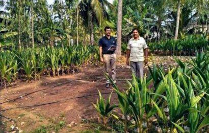 Slump in demand, pest attack dent coconut farmers' income