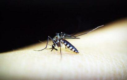 Tamil Nadu has zero Zika virus cases, preventive measures in place: Health minister