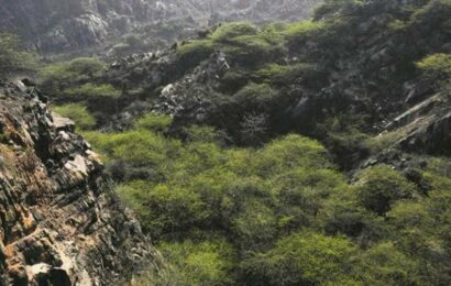 Haryana govt panel suggests redefining Aravallis, will shrink protected area