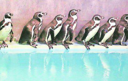 In BMC, BJP, Cong take on Shiv Sena over floating Rs 15-cr tender for penguin upkeep