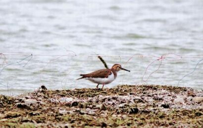 Snares to trap birds found at Achankulam