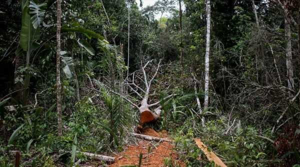 Some 30% of global tree species at risk of extinction: Report