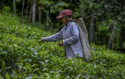 Sri Lanka eyeing green agriculture